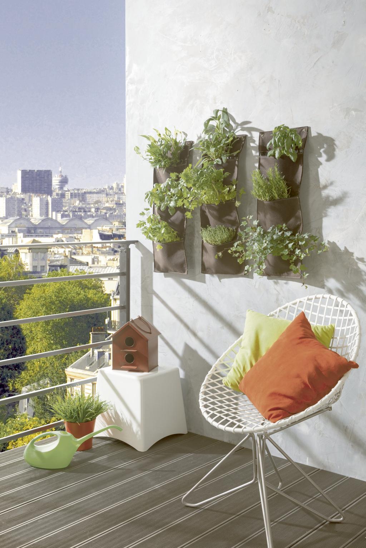 Per coltivare piante rampicanti piante perenni e spezie - Piante per coprire muri ...